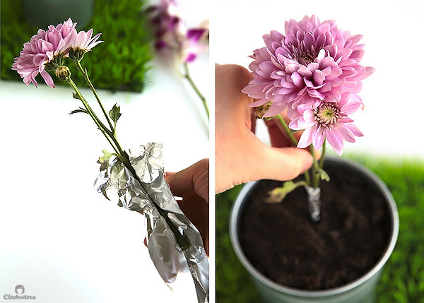 Potted Dirt Cake