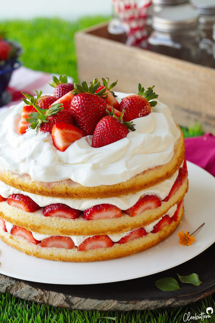 Strawberry Cream Cake Cleobuttera